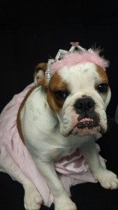 """""""Princess"""" Gracie wants your car heater to be in good repair!"""
